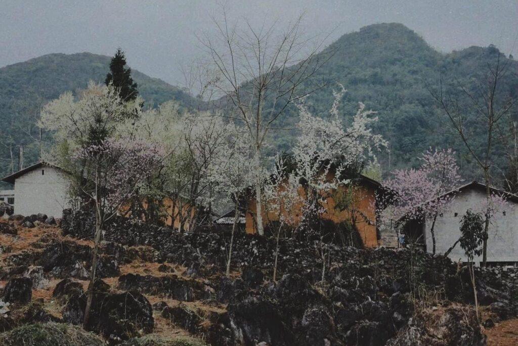 Hà Giang Vào Tháng 3